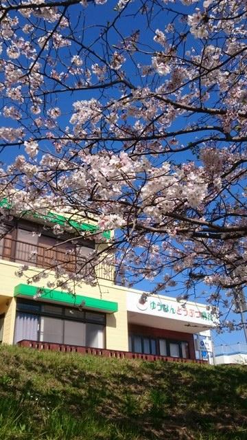 病院&桜3